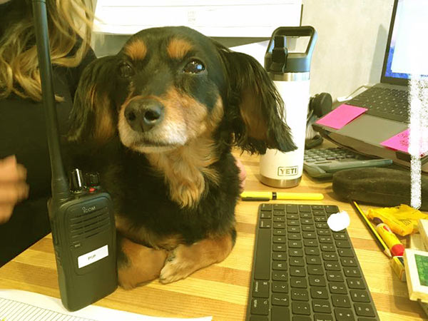 Image of Rick Ness partner dog named Ruby